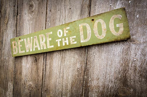 What to do if a Dog Bites You in NJ